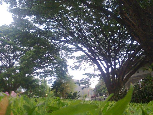 Taman Depan Rektorat UIN malang